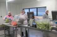 La nouvelle légumerie transforme 600 tonnes de produits par an